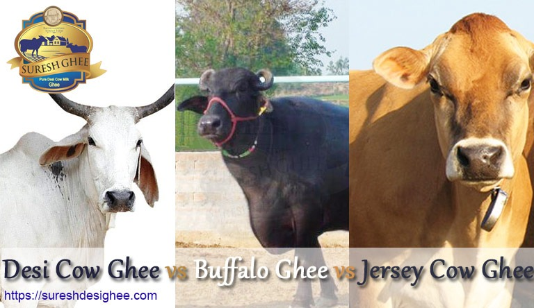 Desi Cow Ghee vs Buffalo Ghee vs Jersey Cow Ghee: SureshDesiGhee.com