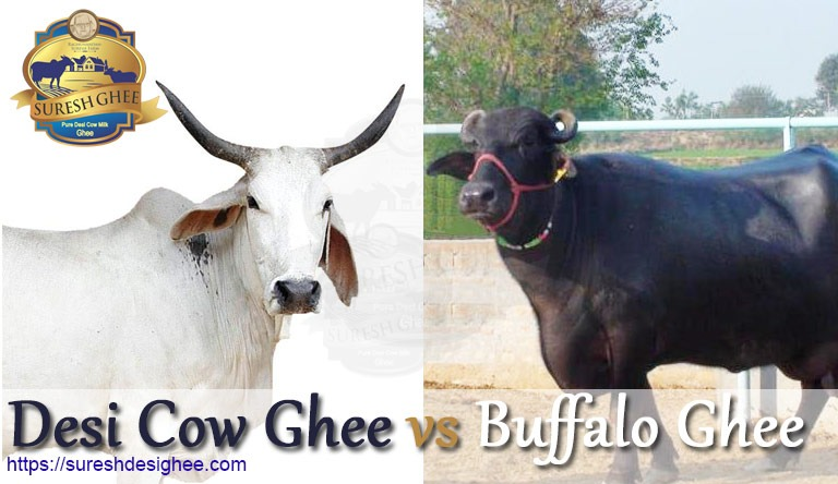 Desi Cow Ghee vs Buffalo Ghee: SureshDesiGhee.com
